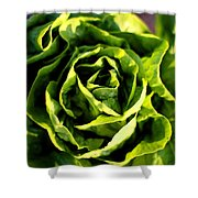 Buttercrunch Lettuce From Above Shower Curtain