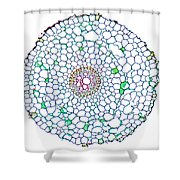 Buttercup Ranunculus Young Root Shower Curtain