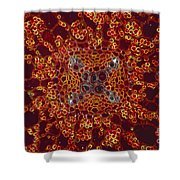 Buttercup Vascular System Shower Curtain by M I Walker