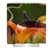 Butterflies Are Free... Shower Curtain