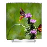 Butterflies On Thistles Shower Curtain