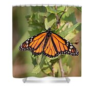 Butterfly - Monarch - Resting Shower Curtain