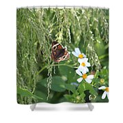 Butterfly 13 Shower Curtain
