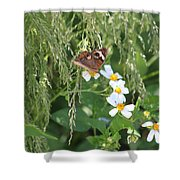Butterfly 15 Shower Curtain