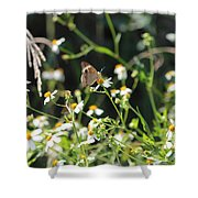Butterfly 17 Shower Curtain