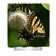 Butterfly 2 Shower Curtain