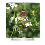 Butterfly 24 Shower Curtain