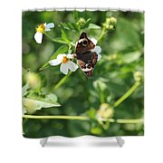 Butterfly 25 Shower Curtain