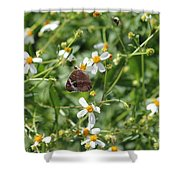 Butterfly 28 Shower Curtain
