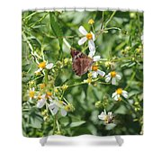 Butterfly 30 Shower Curtain