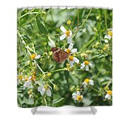 Butterfly 31 Shower Curtain