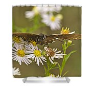 Butterfly 3319 Shower Curtain