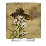 Butterfly 3321 Shower Curtain