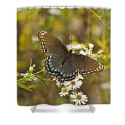 Butterfly 3325 Shower Curtain