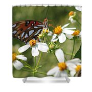 Butterfly 41 Shower Curtain