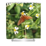 Butterfly 48 Shower Curtain