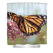 Butterfly Beauty - Monarch IIi Shower Curtain