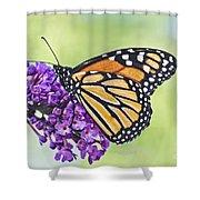 Butterfly Beauty-monarch Shower Curtain
