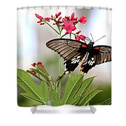 Butterfly Candy Shower Curtain