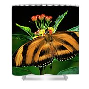 Butterfly Dryadula Heliconius Feeding Shower Curtain