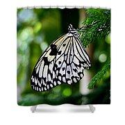 Butterfly II Shower Curtain