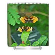 Butterfly Lovers Shower Curtain