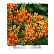 Butterfly Milkweed Shower Curtain