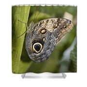 Butterfly On A Green Branch Niagara Shower Curtain