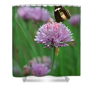 Butterfly On Clover Shower Curtain