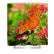 Butterfly On Pentas Shower Curtain