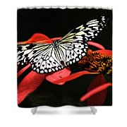 Butterfly On Red Shower Curtain