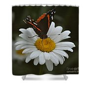 Butterfly On Shasta Daisy Shower Curtain