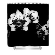 Butterfly Orchid In The Shadows Shower Curtain