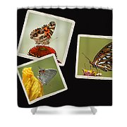 Butterfly Picture Page Collage Shower Curtain