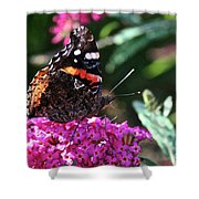 Butterfly Plant At Work Shower Curtain