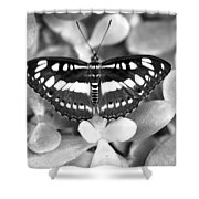 Butterfly Study #0061 Shower Curtain