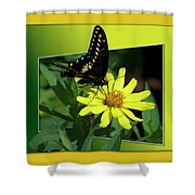 Butterfly Swallowtail 01 16 By 20 Shower Curtain