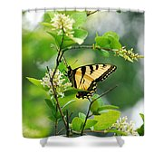 Butterfly Tiger Swallow Shower Curtain