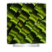 Butterfly Wing Scales Shower Curtain