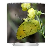 Butterfly - Yellow Sulphur On Yellow Shower Curtain