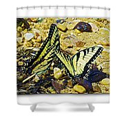 Butterlies At The Beach Shower Curtain