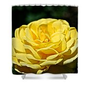 Buttery Rose Shower Curtain