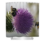 Buzz And Munch Shower Curtain