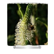 Buzz Buzz Shower Curtain