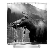 Bw Cow Shower Curtain