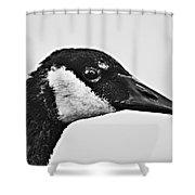 Bw Portrait-canadian Goose Shower Curtain