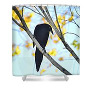 Bye Bye Blackbird  Shower Curtain
