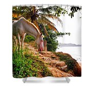 Caballo Blanco Shower Curtain by Skip Hunt
