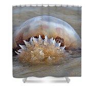 Cabbage Head Jellyfish  Shower Curtain