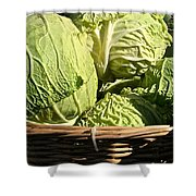 Cabbage Heads Shower Curtain